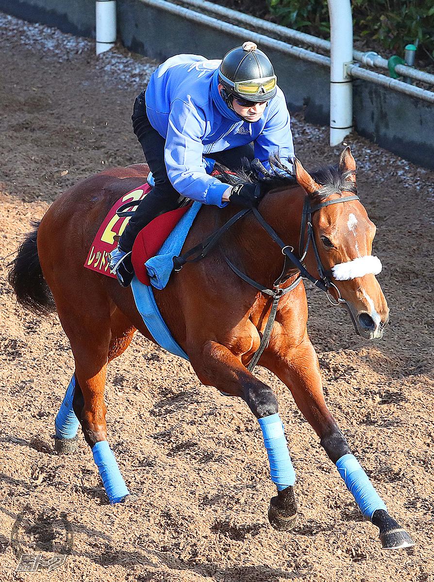 レッドアステルの馬体写真