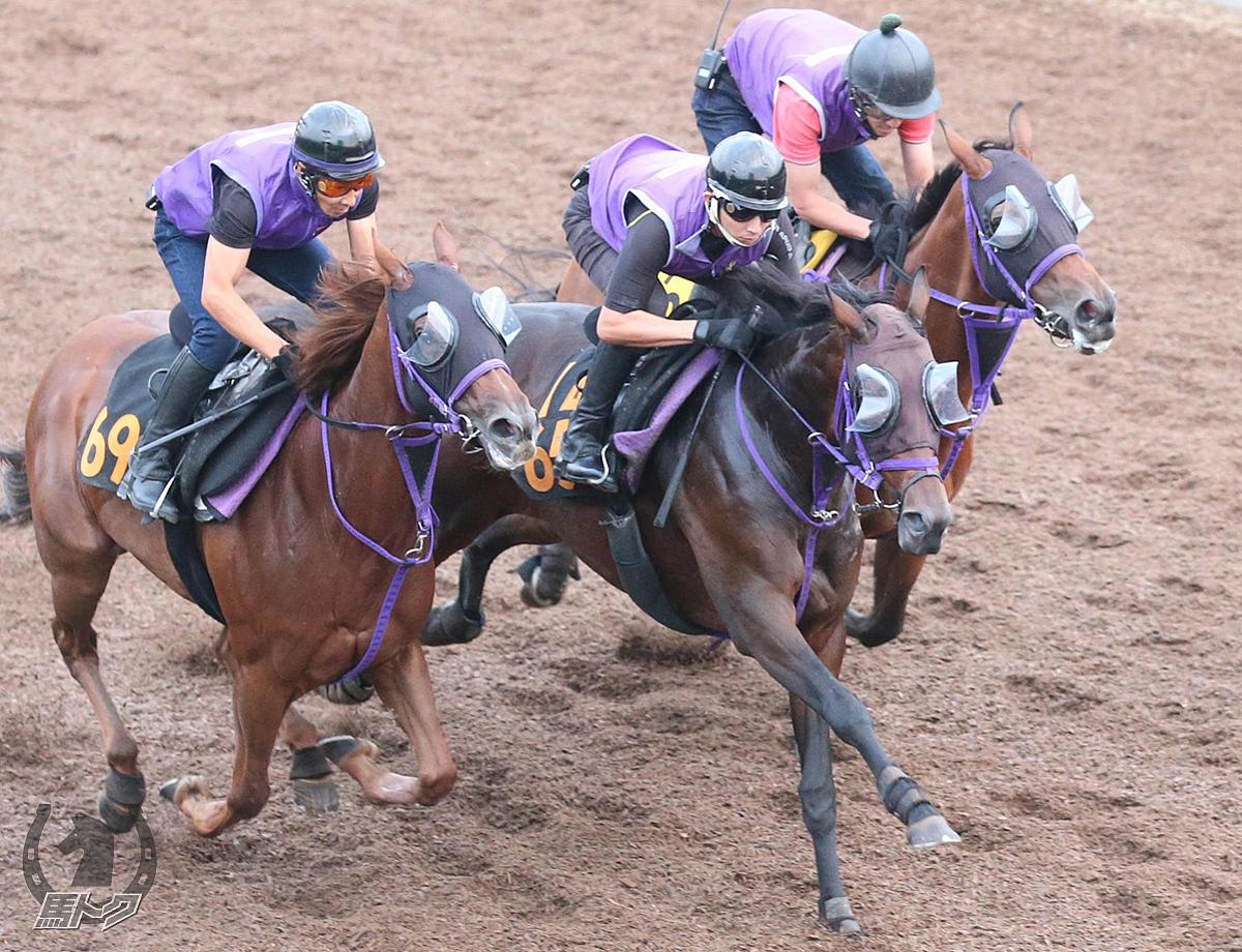 レッドベルディエスの馬体写真
