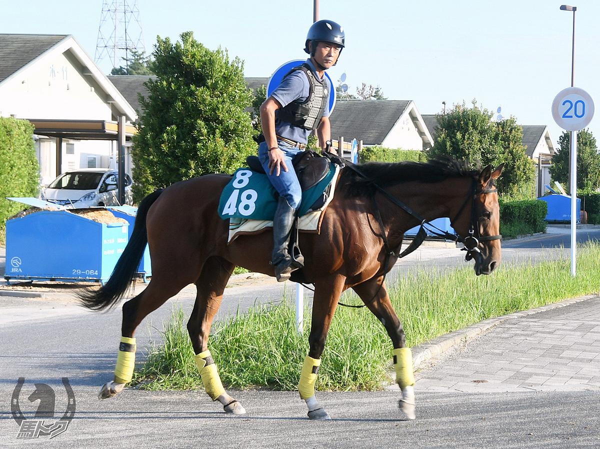 レッドベレーザの馬体写真