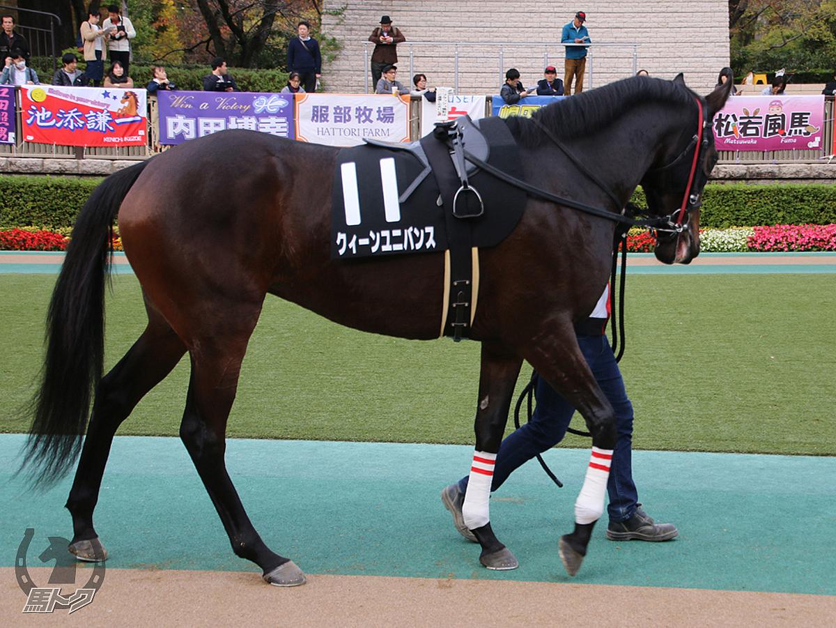 クィーンユニバンスの馬体写真