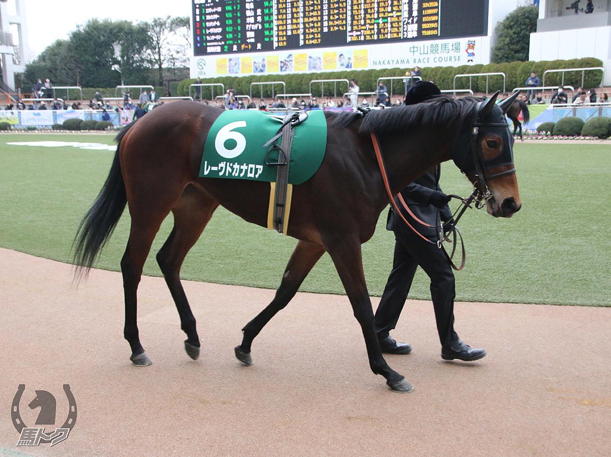 レーヴドカナロアの馬体写真