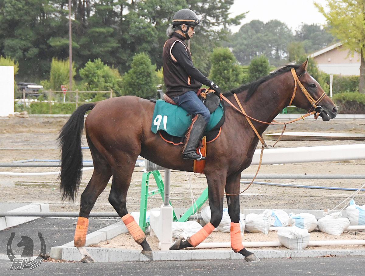 イシュタルゲートの馬体写真
