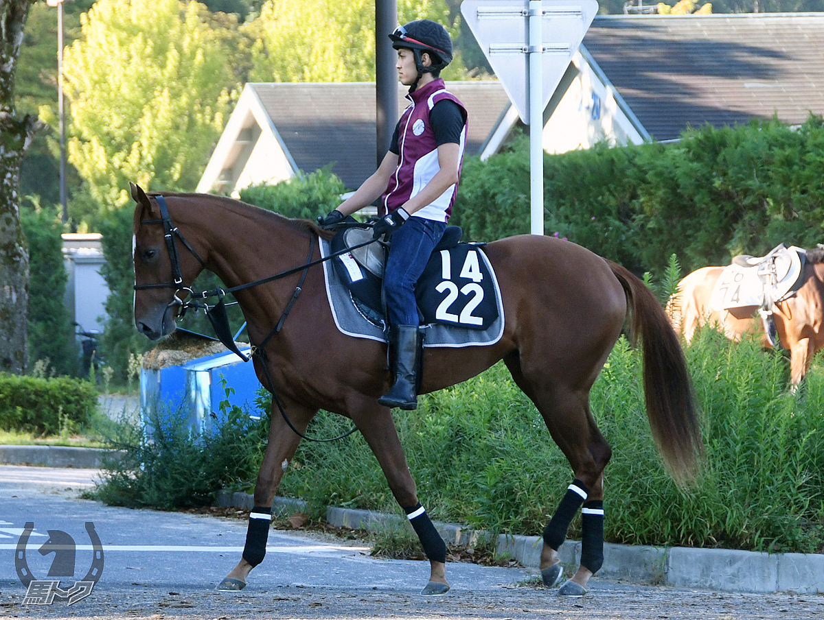 レッドモアナの馬体写真