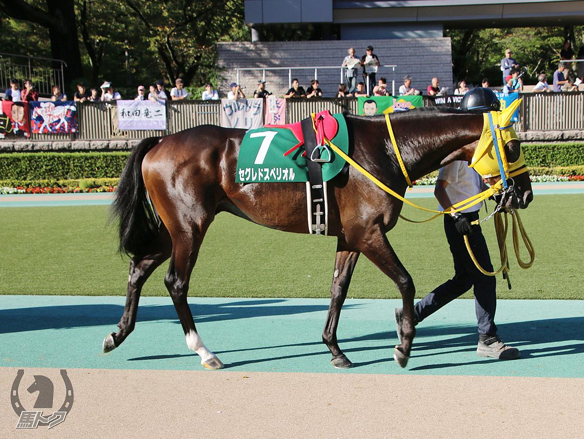 セグレドスペリオルの馬体写真