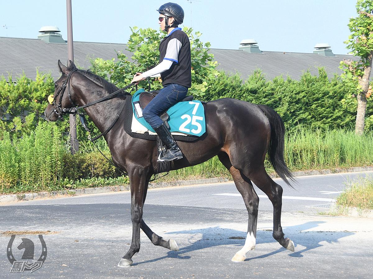 アックアアルタの馬体写真