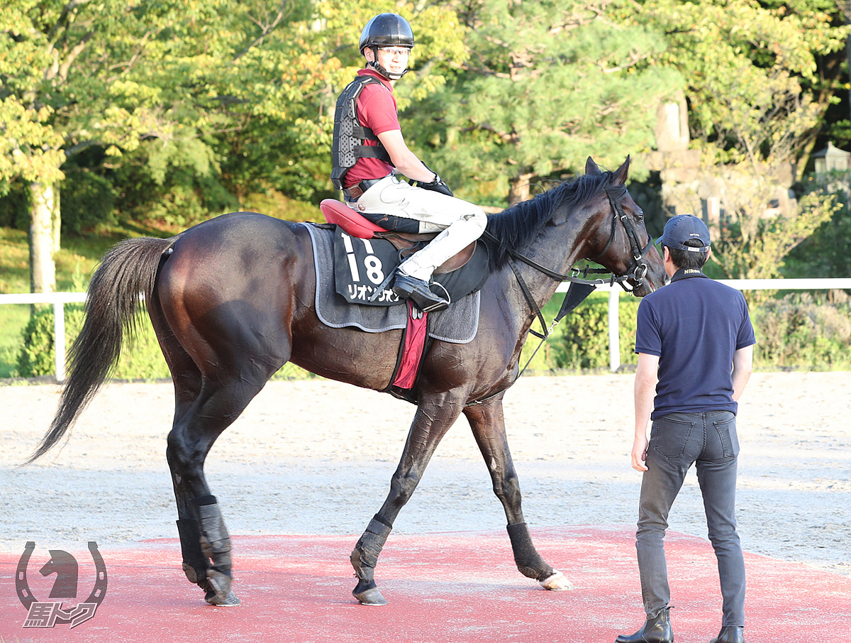 リオンリオンの馬体写真