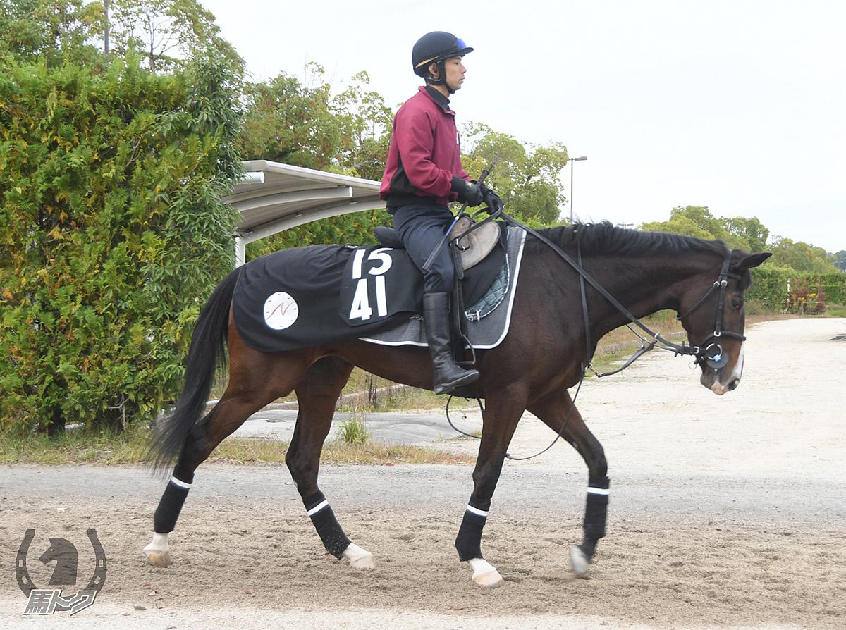 ラディアントパレスの馬体写真