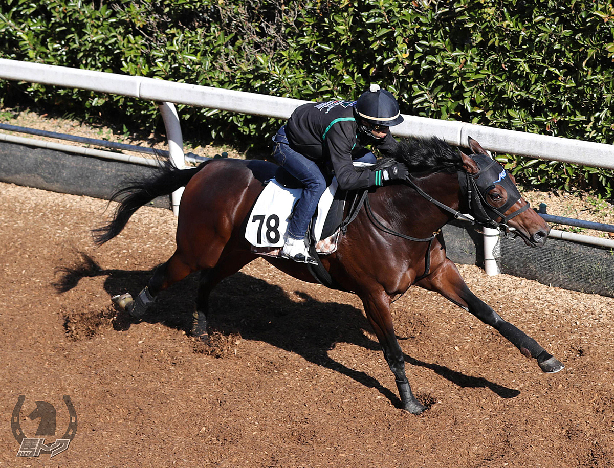 アドマイヤジャスタの馬体写真