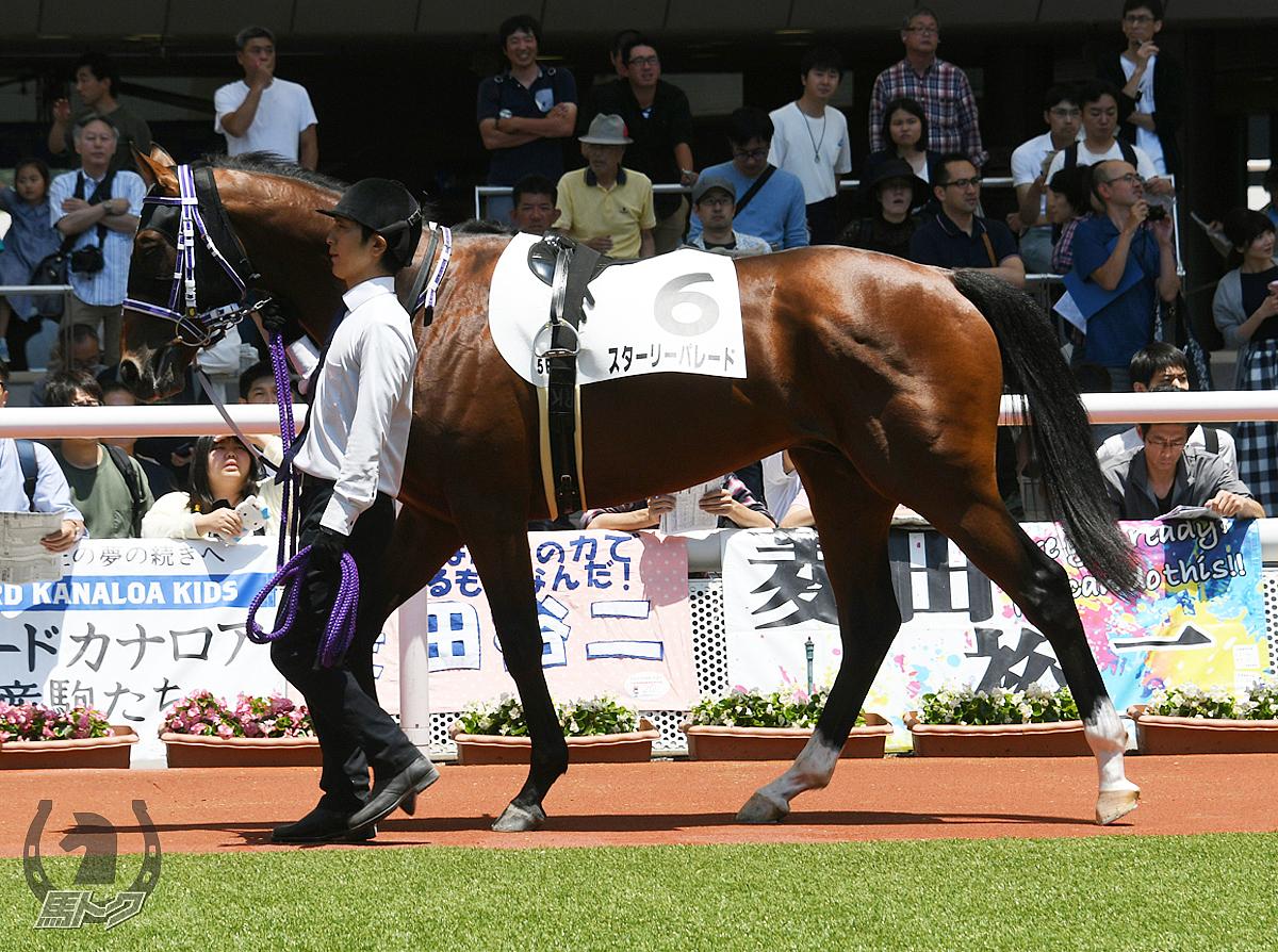 スターリーパレードの馬体写真