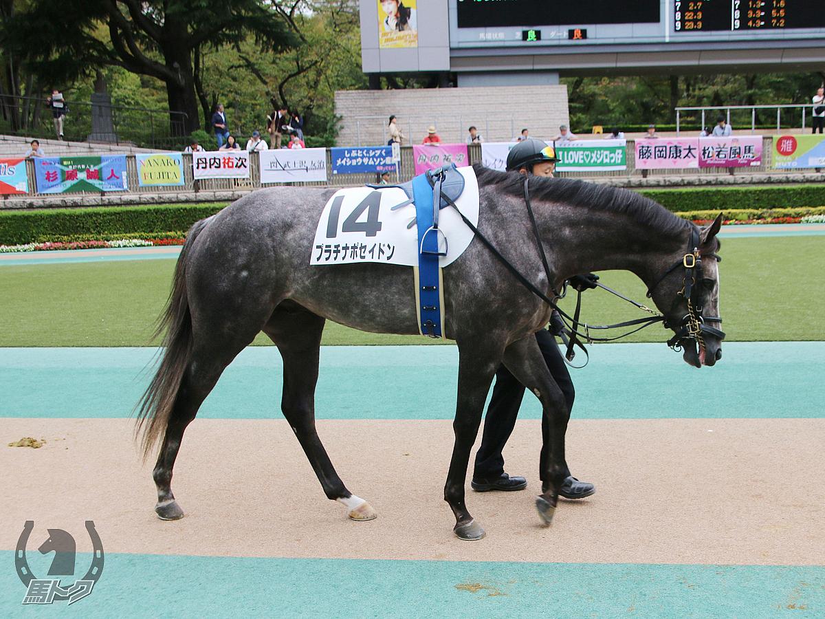 プラチナポセイドンの馬体写真
