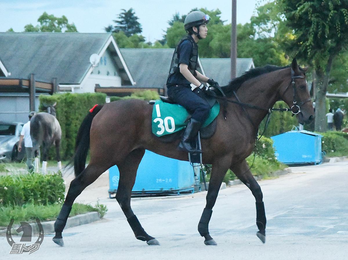 アメリカンウェイクの馬体写真
