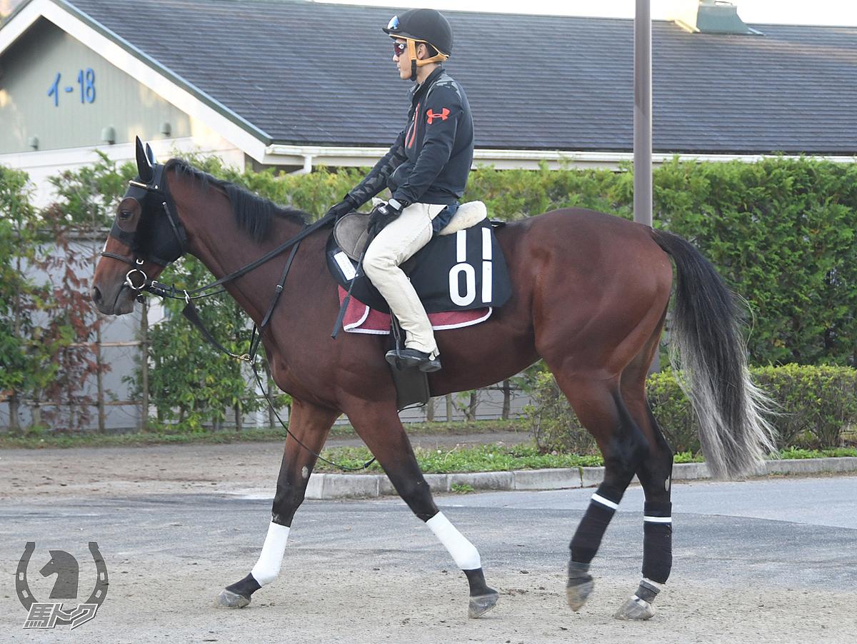 ラズライトノヴァの馬体写真