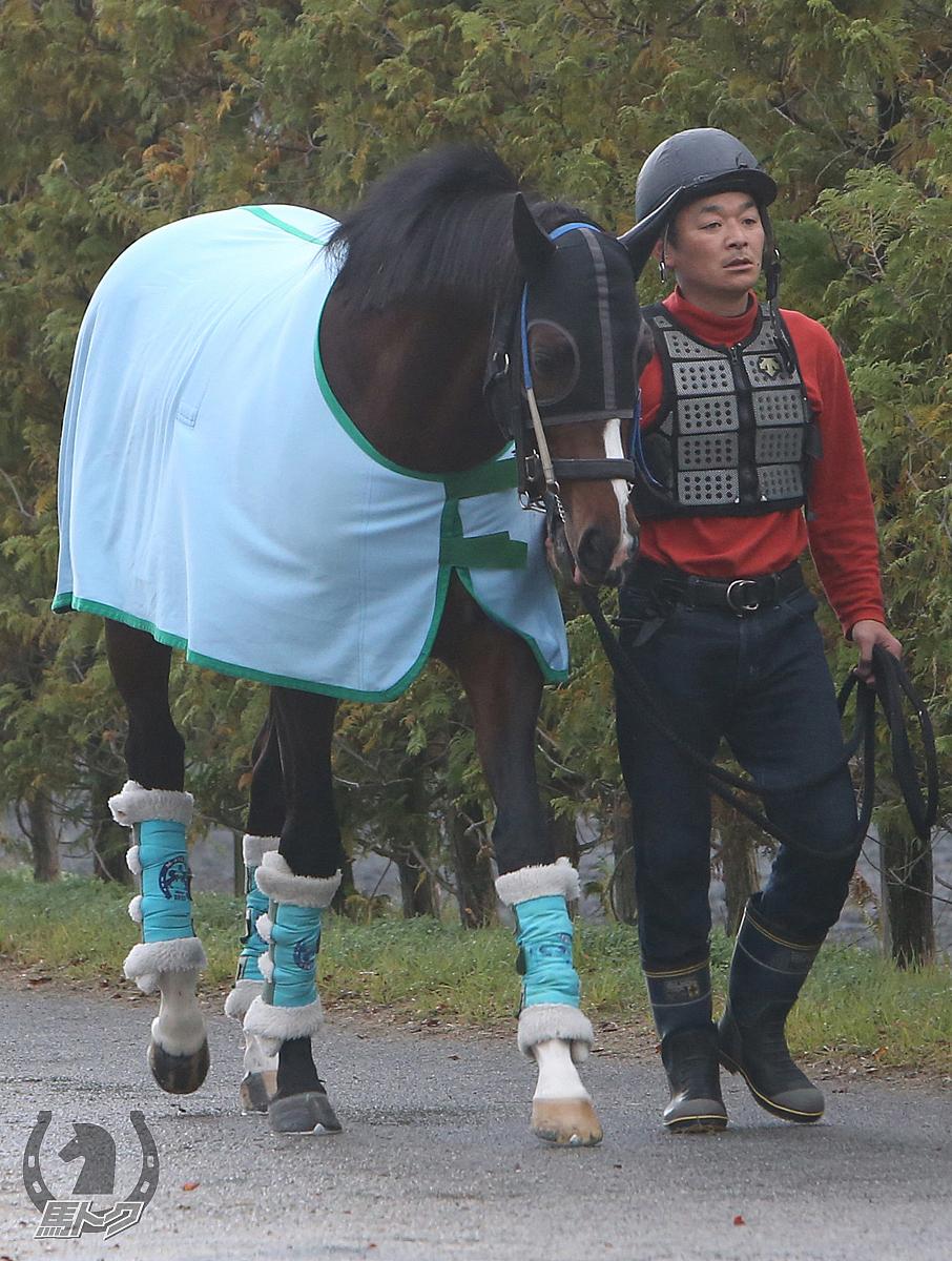 カテドラルの馬体写真
