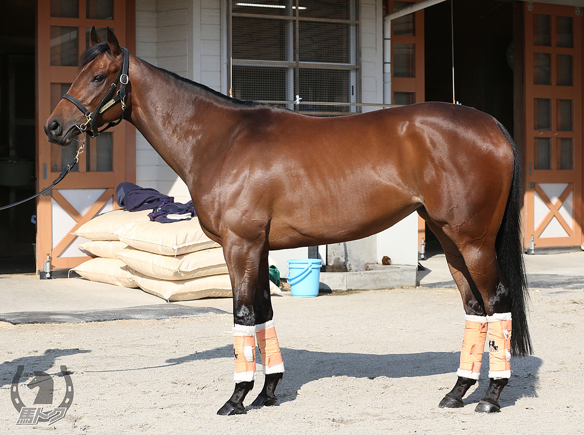 アウィルアウェイの馬体写真
