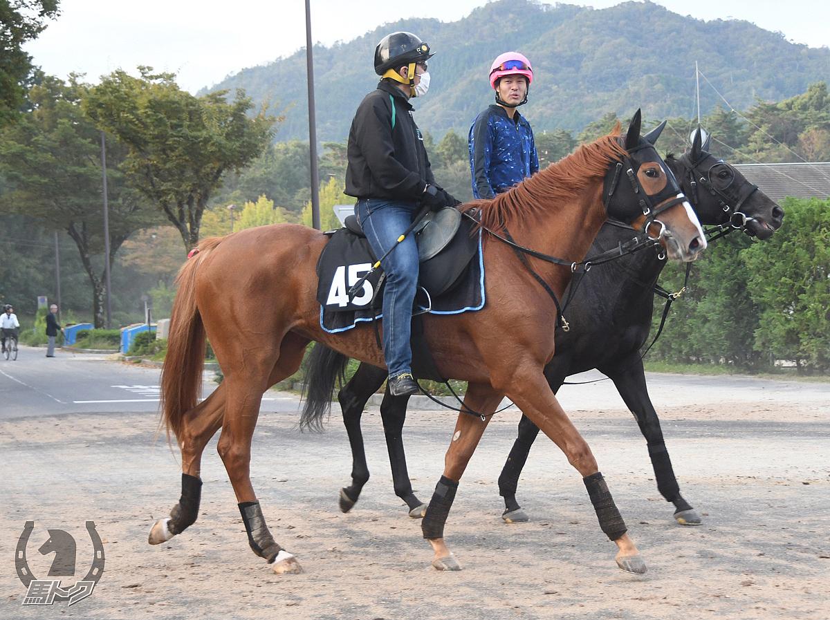アドマイヤビーナスの馬体写真
