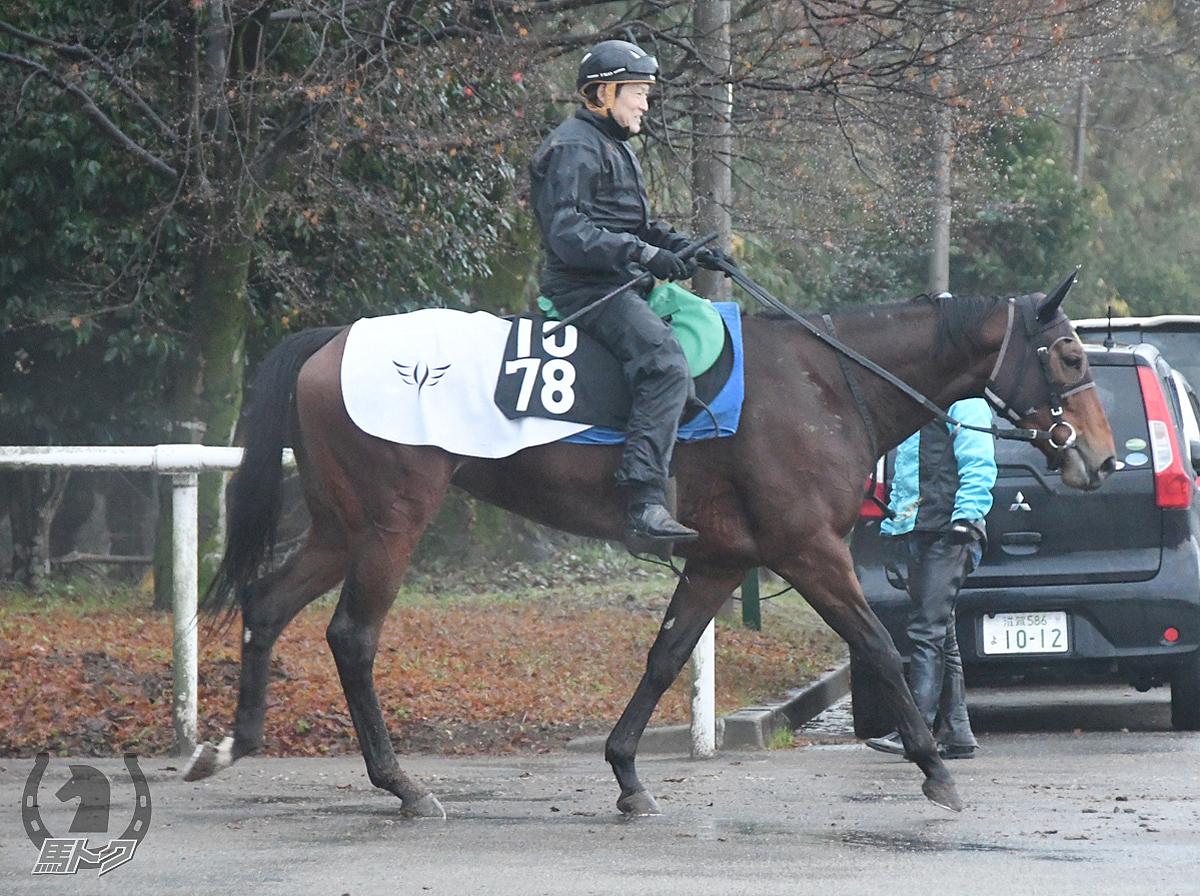 ヤンチャヒメの馬体写真