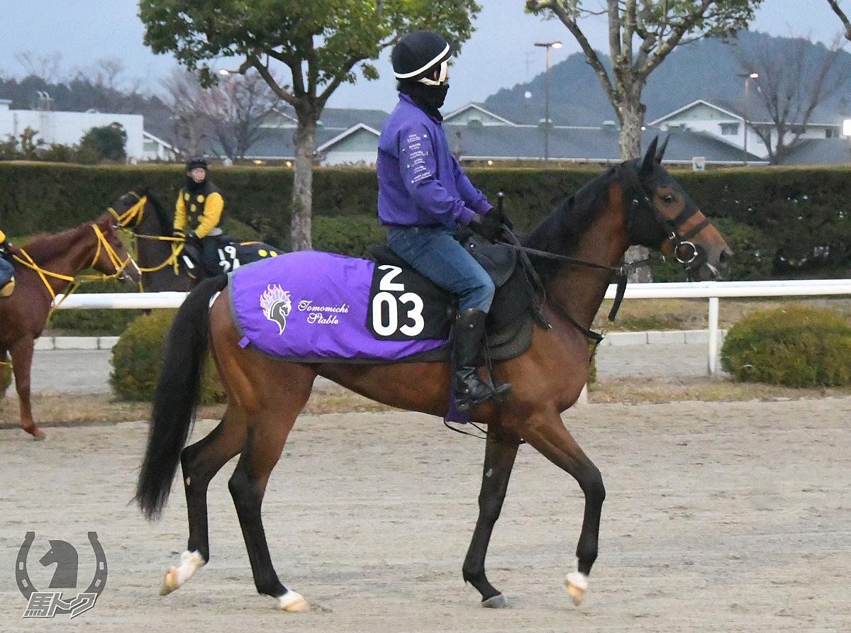 オーサムウインドの馬体写真