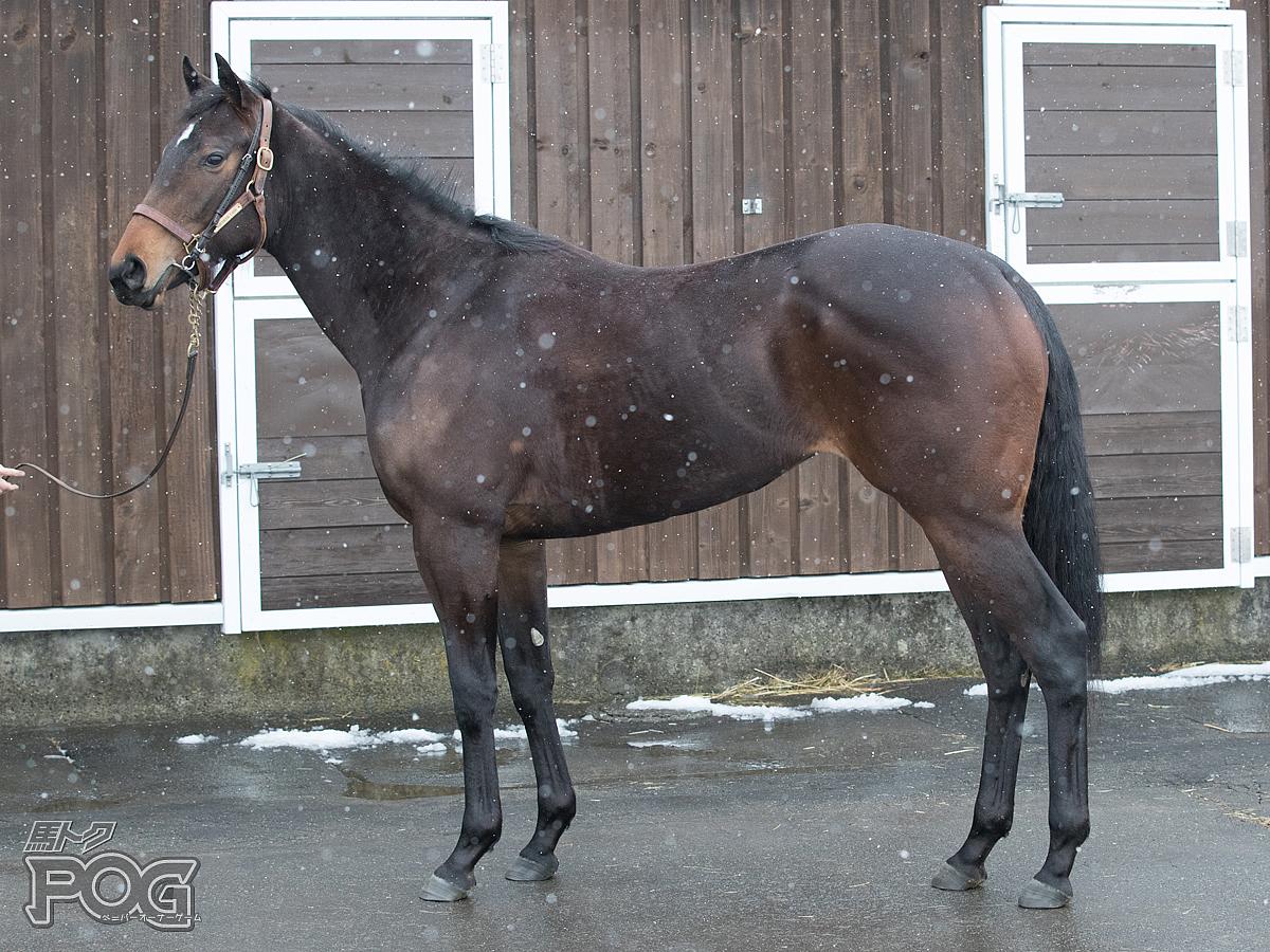 ラティーンセイルの馬体写真