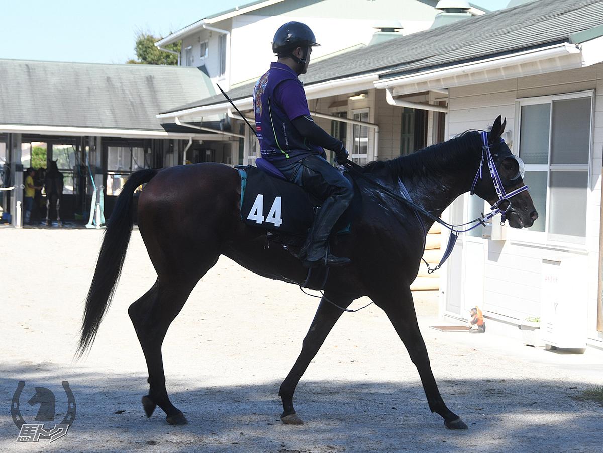 アドマイヤデルタの馬体写真