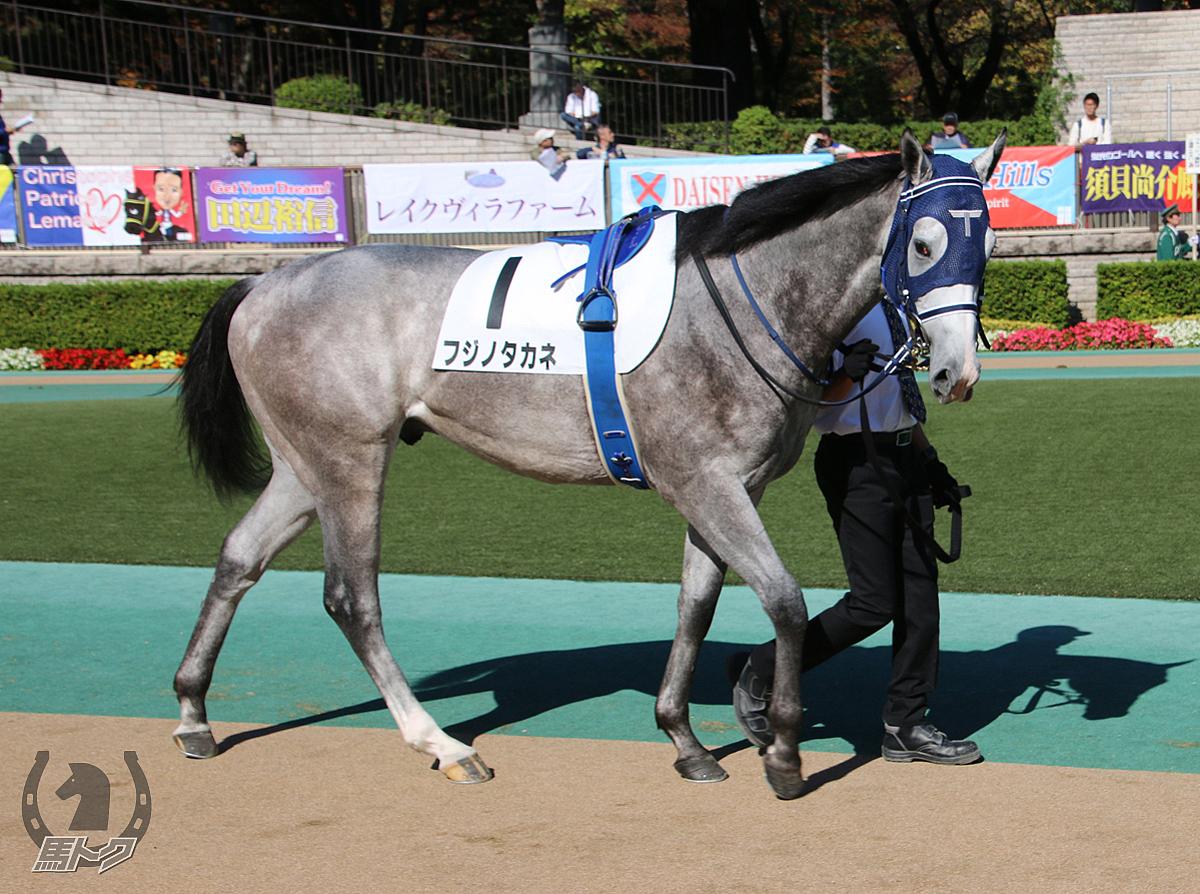 フジノタカネの馬体写真