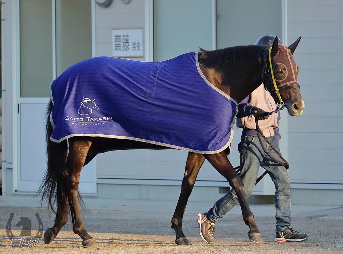 クロノジェネシスの馬体写真
