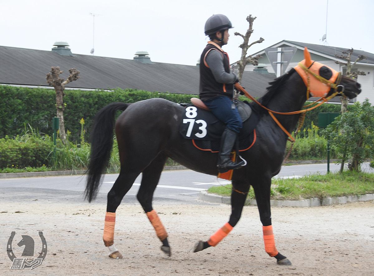 ブラックダンサーの馬体写真