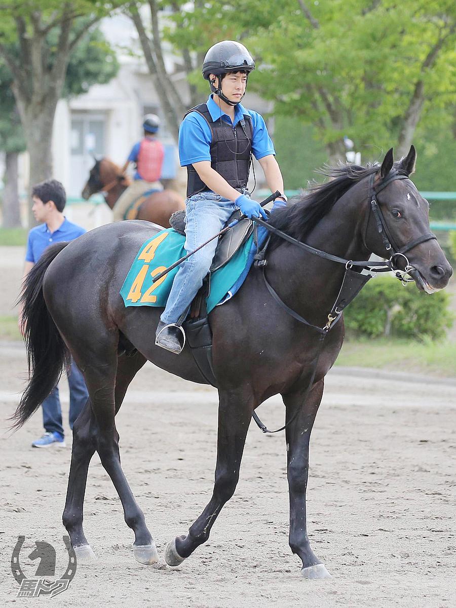 ソークアップザサンの馬体写真