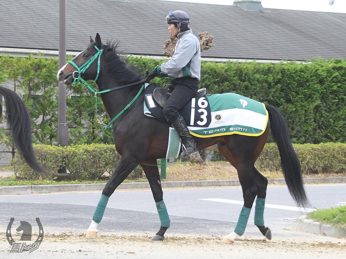 アメジストヴェイグの馬体写真