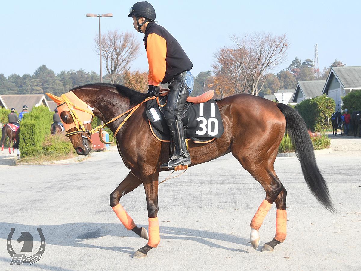 リャスナの馬体写真