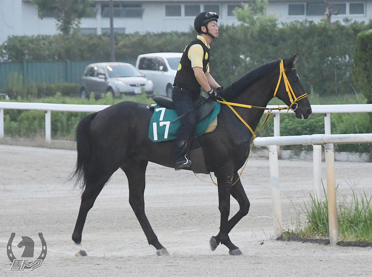 ガラチコの馬体写真