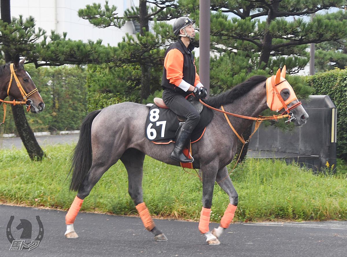 プライドランドの馬体写真