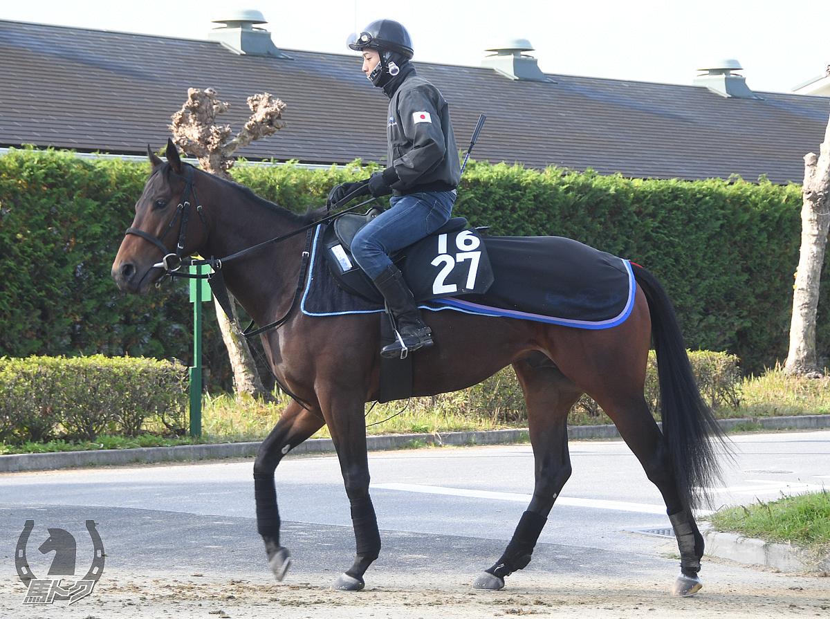 スティングレイの馬体写真