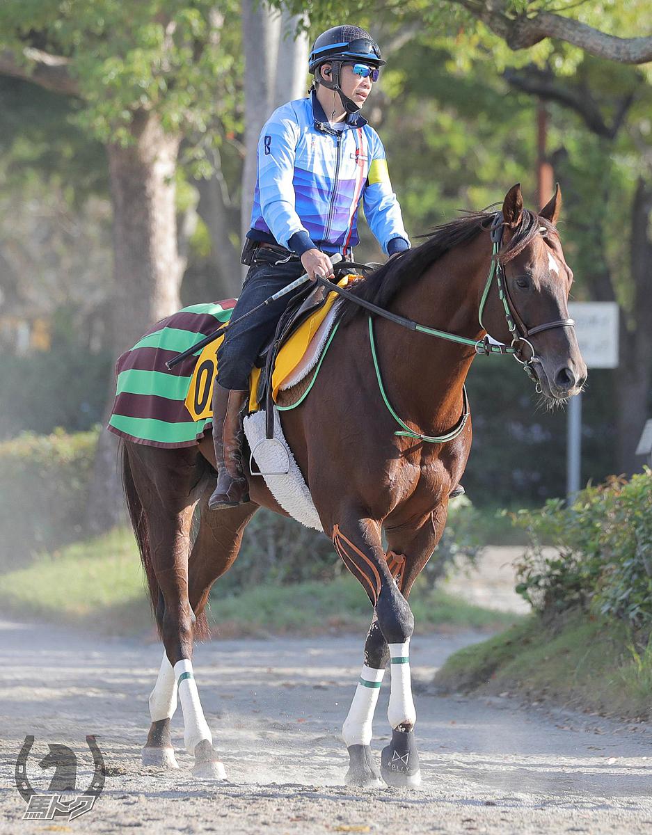 ザダルの馬体写真