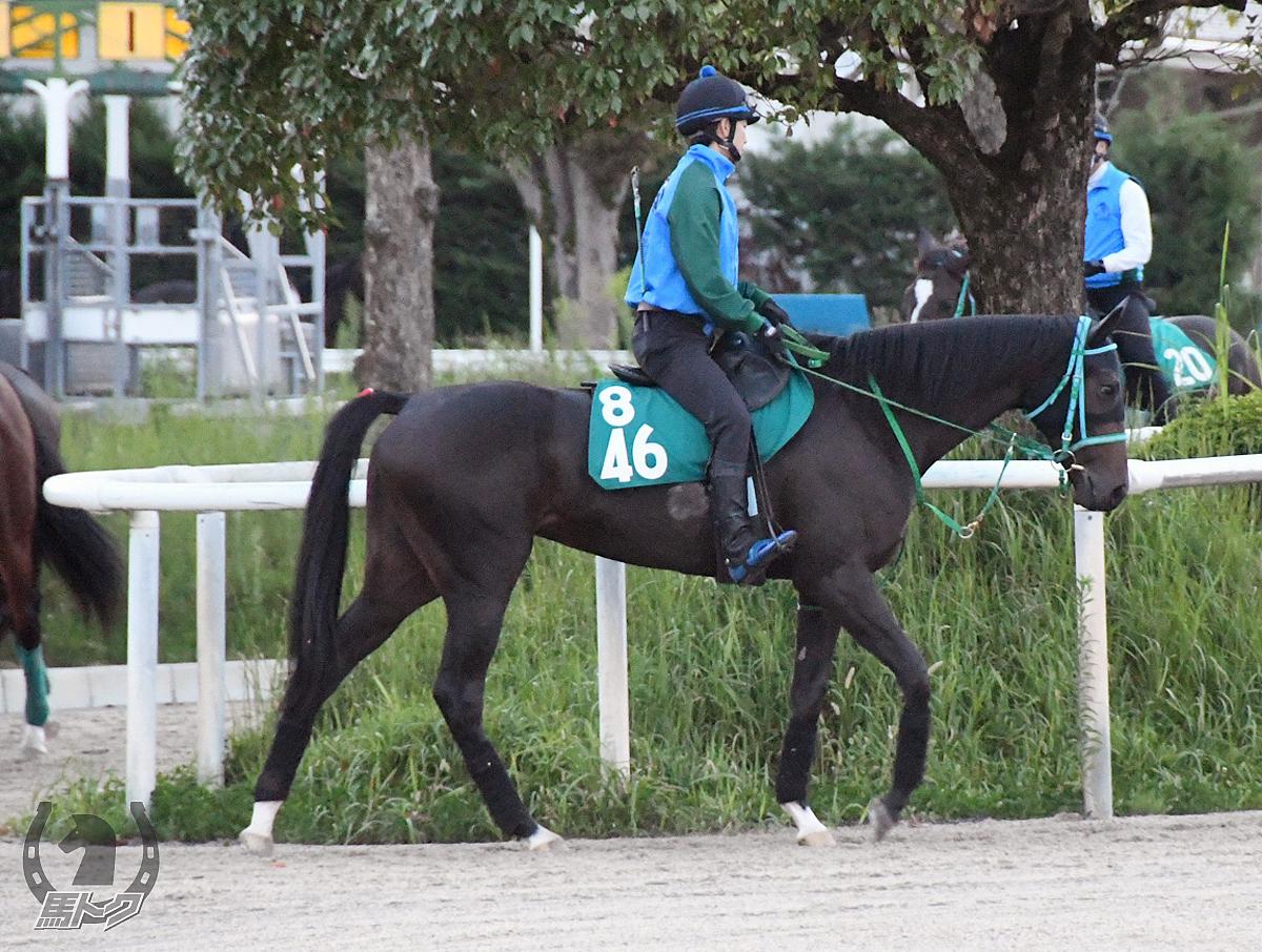 ティグラーシャの馬体写真