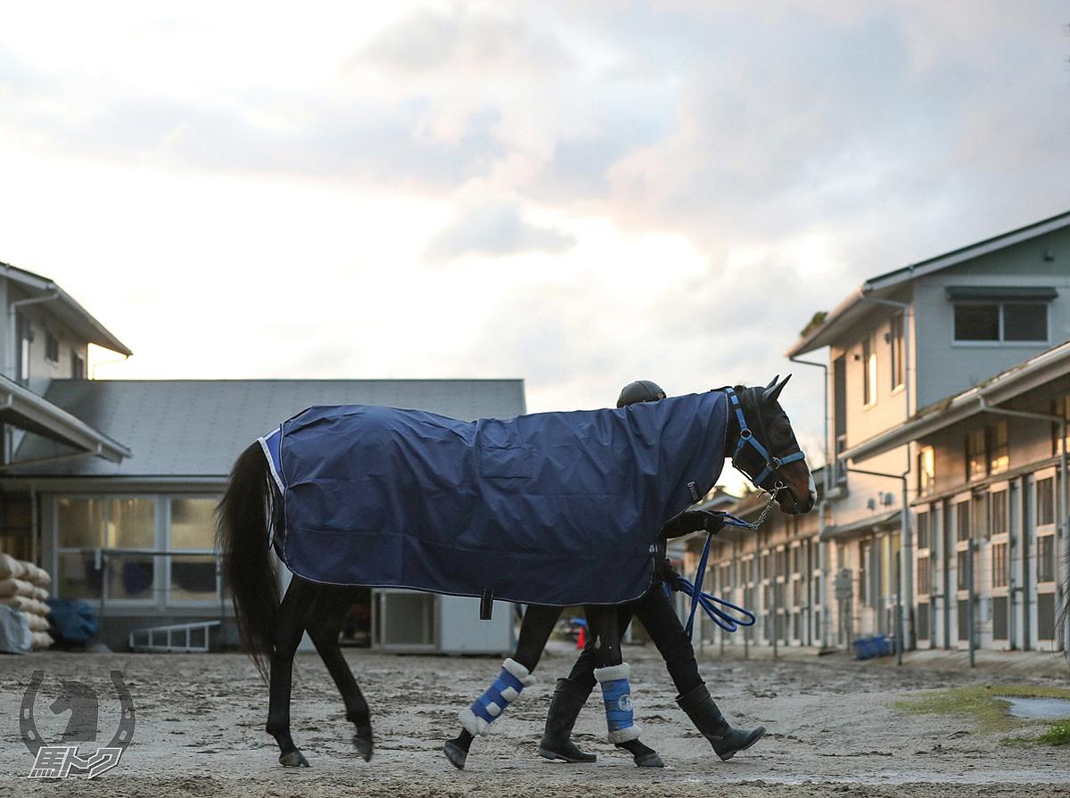 クラージュゲリエの馬体写真