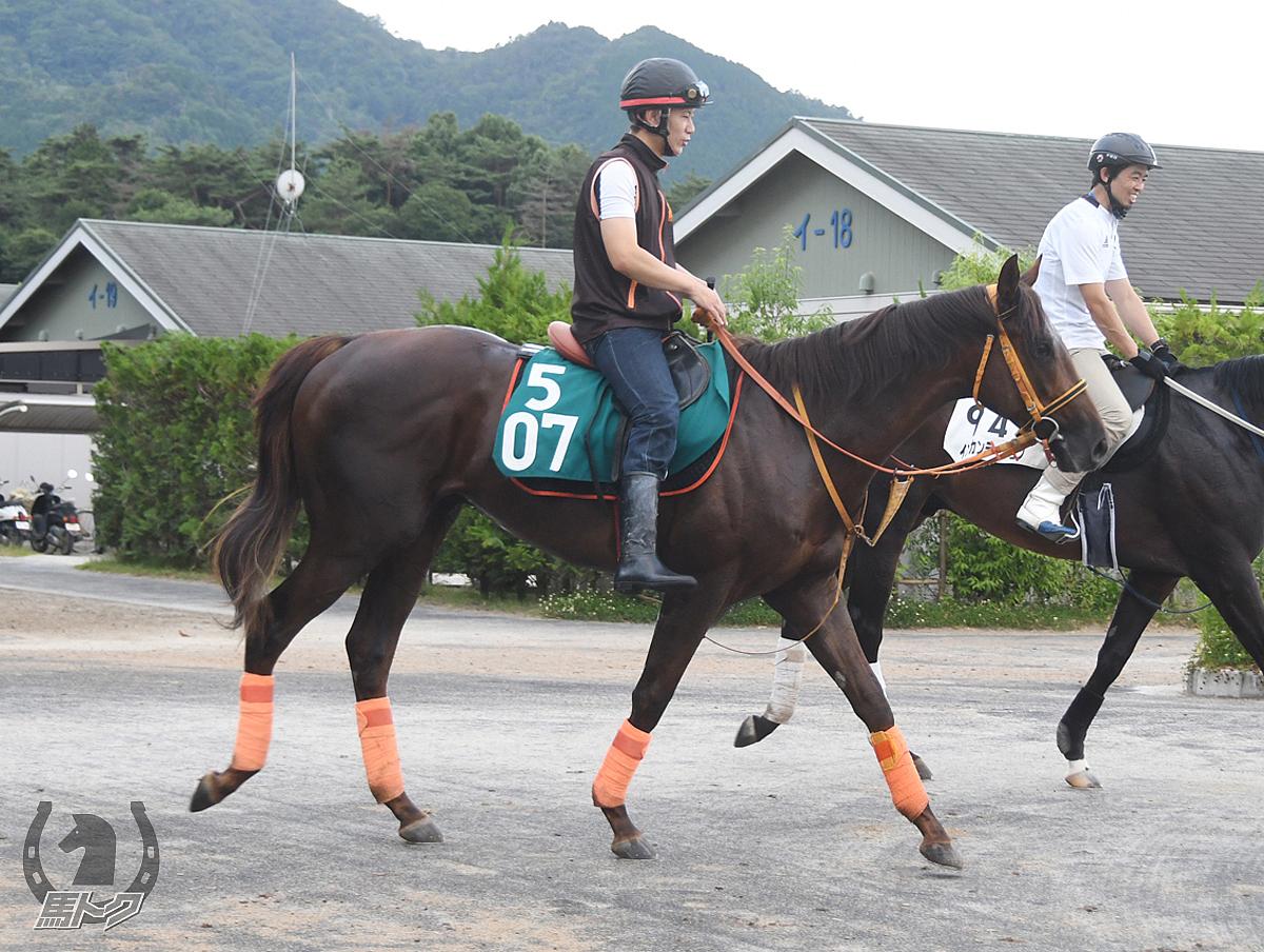 クレッセントムーンの馬体写真