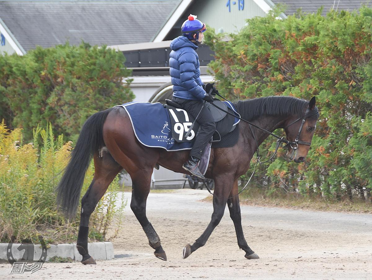 トリックの馬体写真