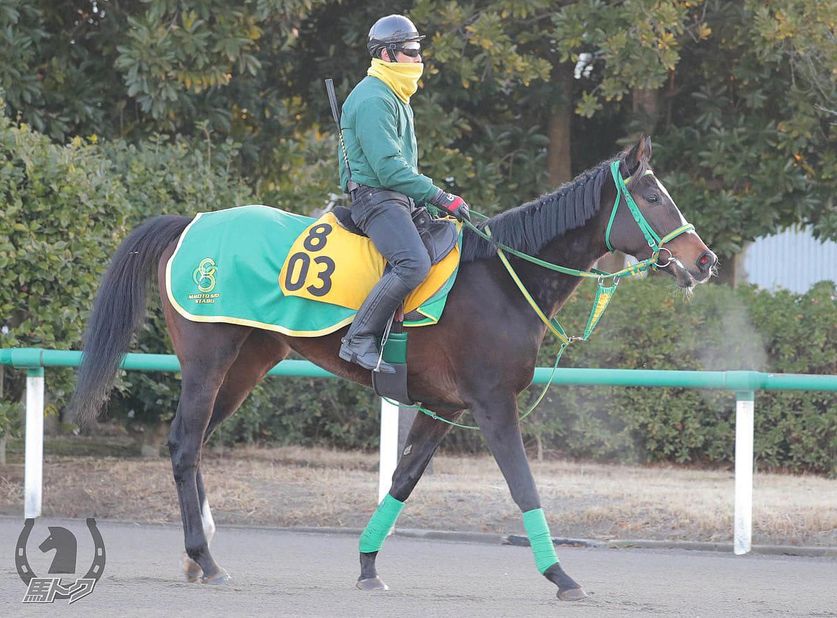 シャドウディーヴァの馬体写真