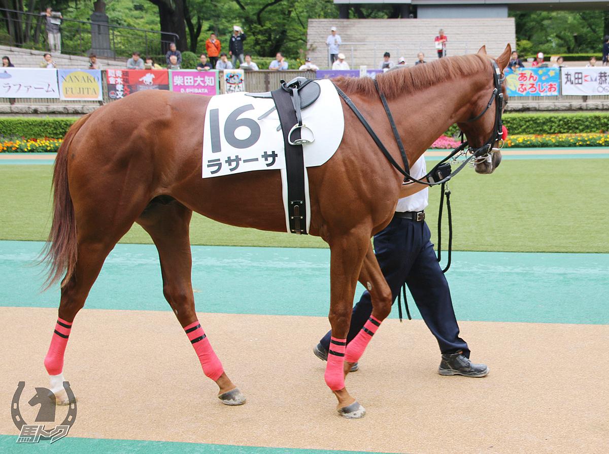 ラサーサの馬体写真
