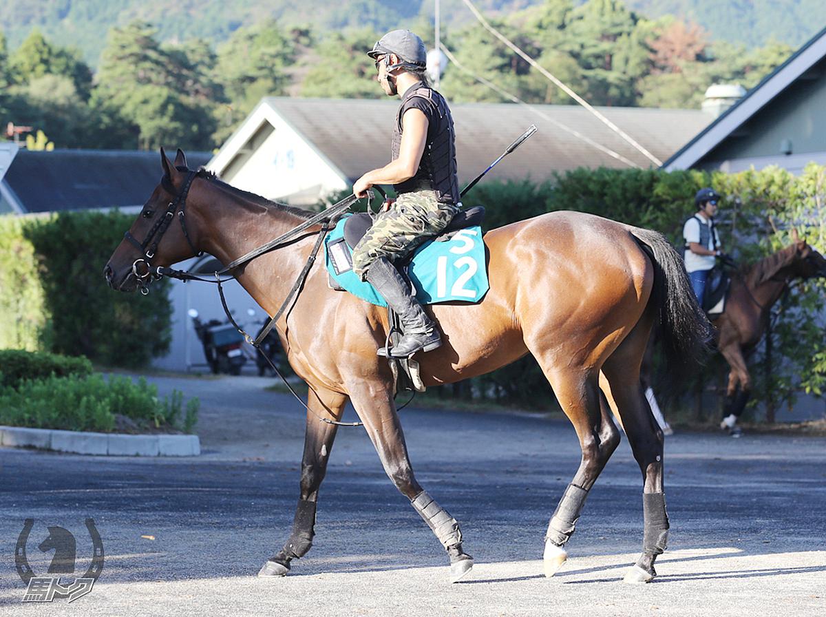 ダイアナブライトの馬体写真