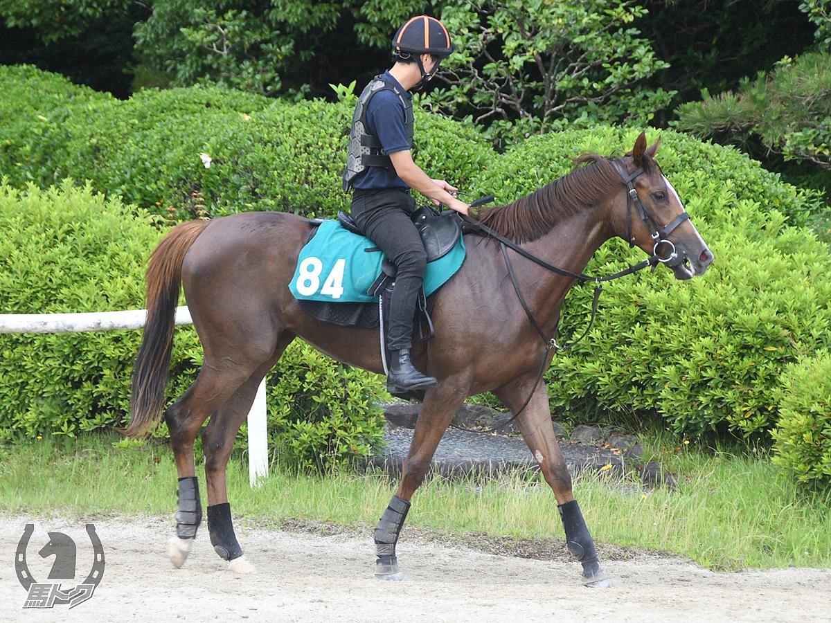 クイーンブロッサムの馬体写真