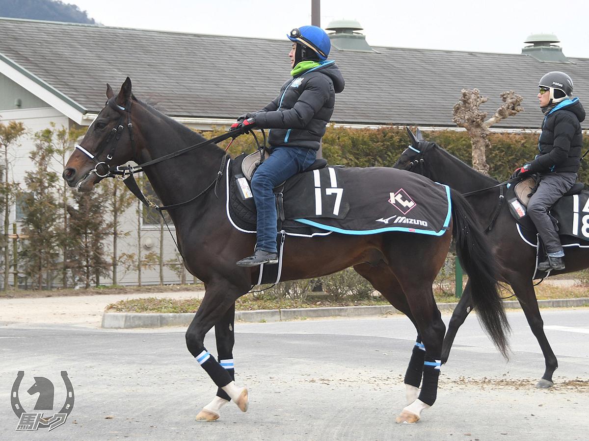 リヴィエラの馬体写真