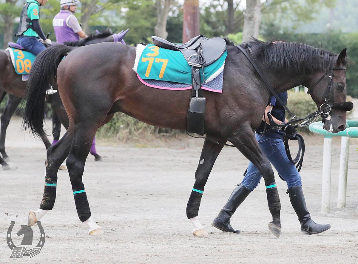 ミッキーポテトの馬体写真