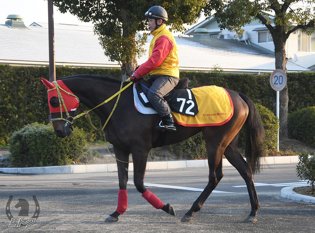 エッセンツァの馬体写真
