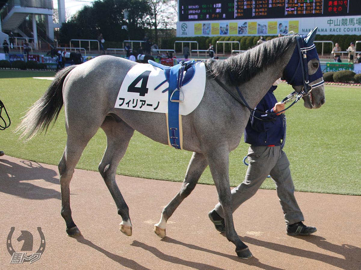 フィリアーノの馬体写真