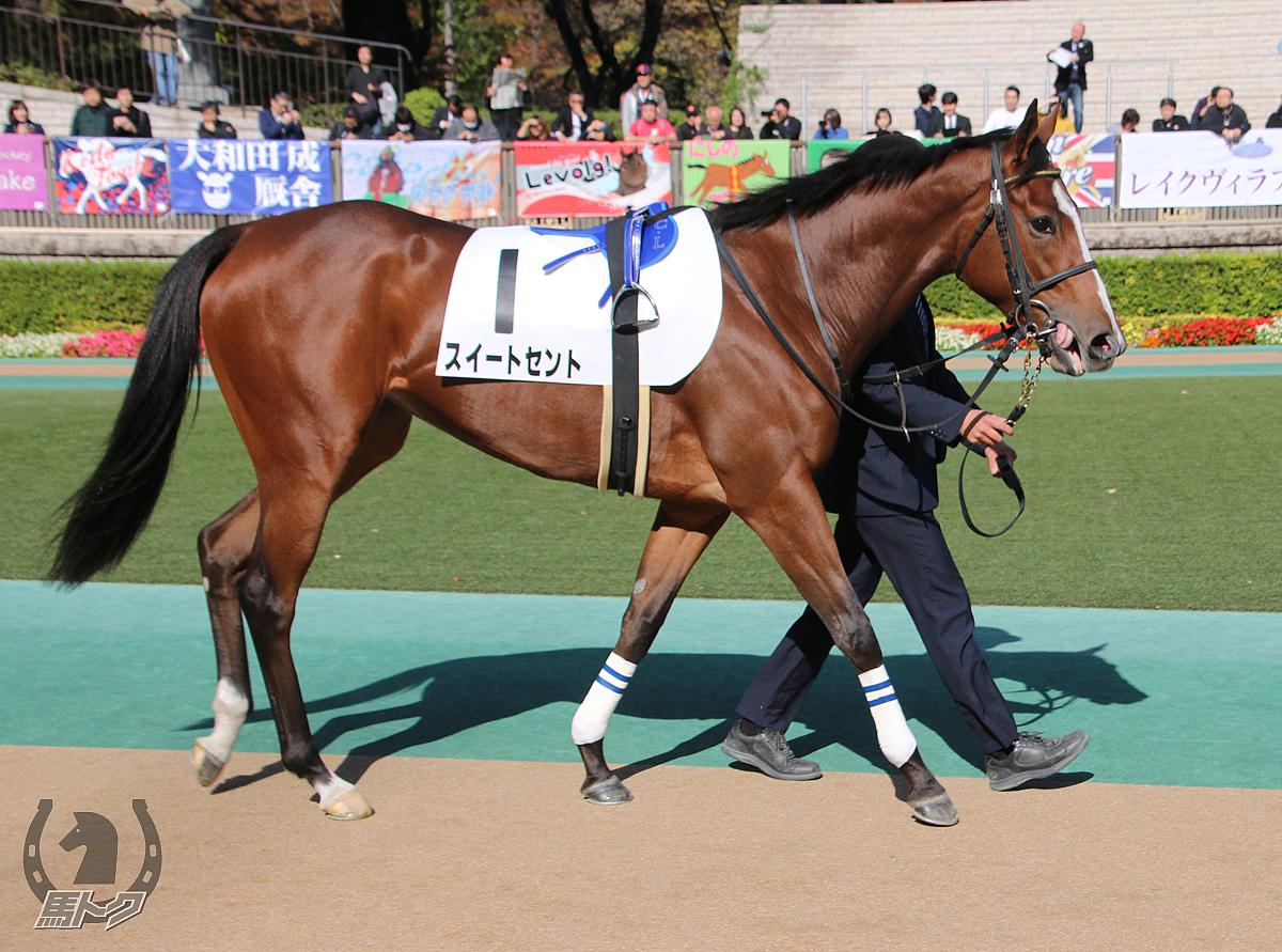 スイートセントの馬体写真