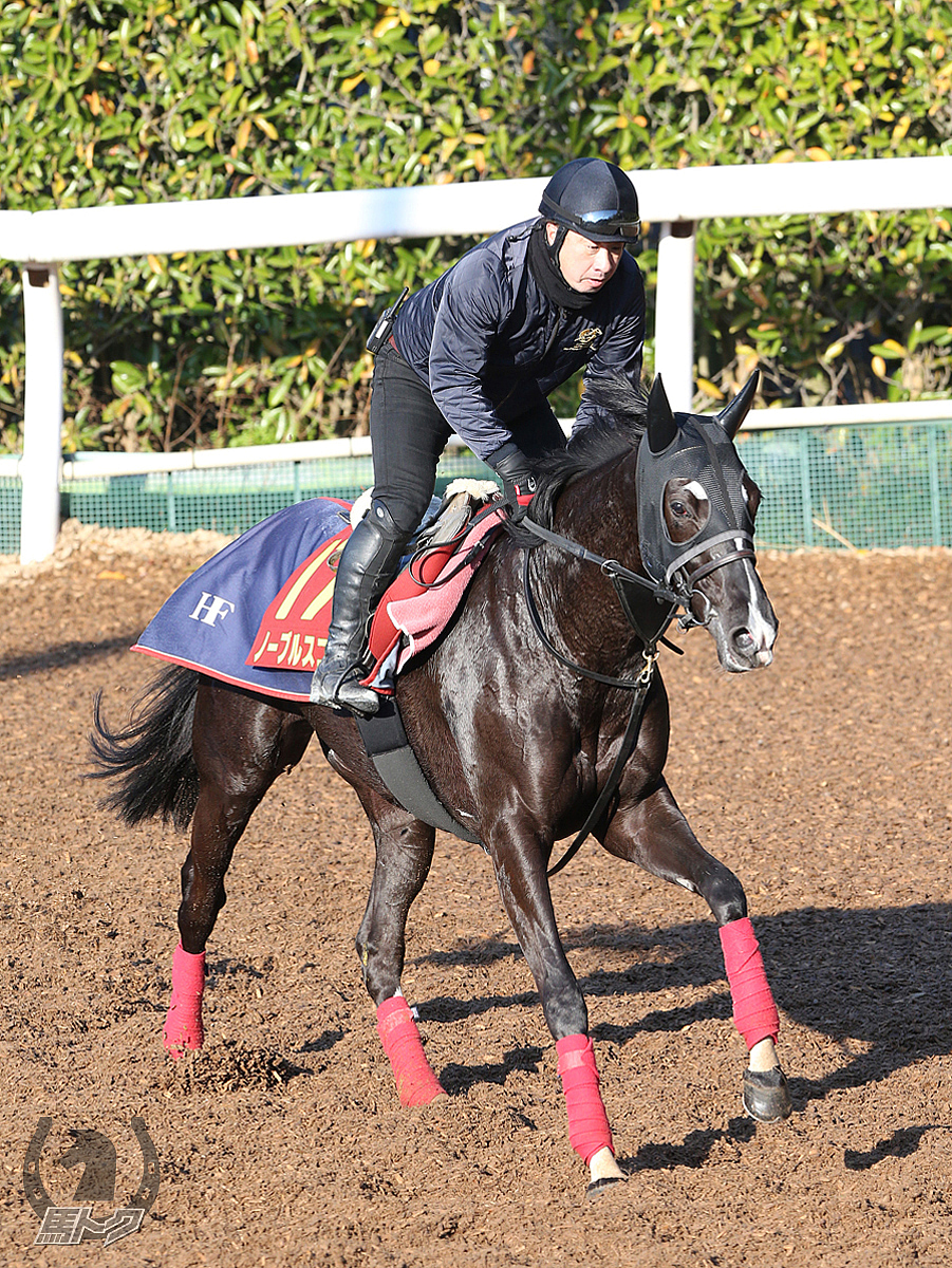 ノーブルスコアの馬体写真