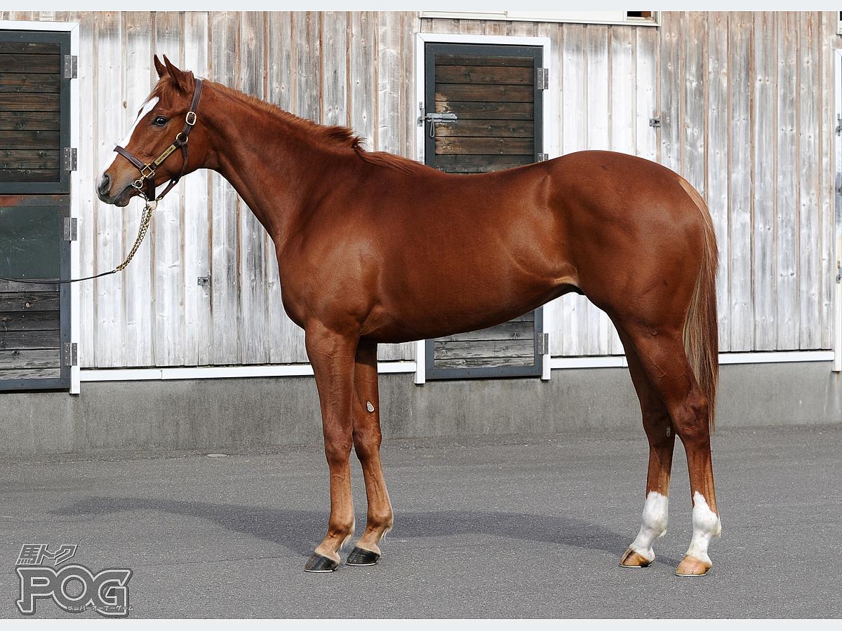ラインハルトの馬体写真