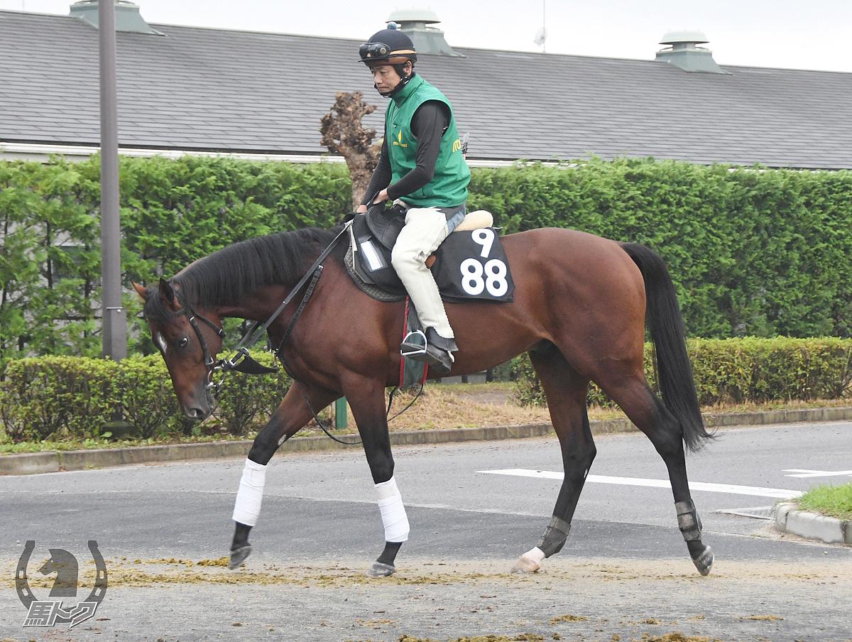 ミッキースピリットの馬体写真