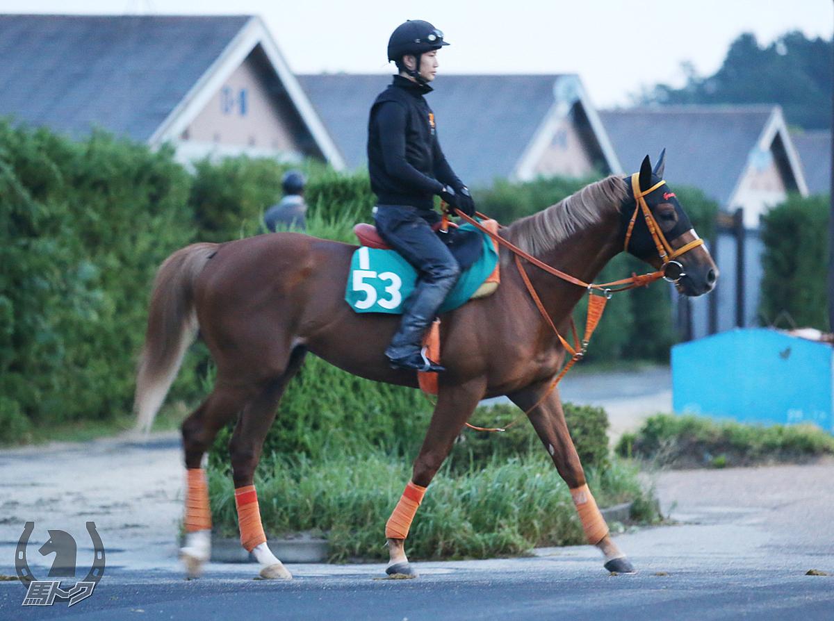スマートユニバンスの馬体写真